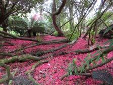 Rhododendron petals