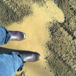 Boots and Puddle